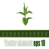 Broto verde como um elemento para beiras, bandeiras e fundos Imagem de Stock Royalty Free