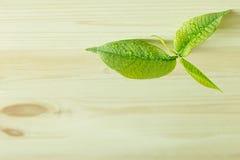 Broto verde novo, folha no fundo de madeira Fundo de madeira Imagens de Stock Royalty Free
