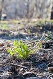 Broto verde que cresce fora do solo Fotografia de Stock Royalty Free