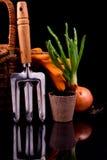 Brotos da cebola, cesta, ancinhos e potenciômetro da turfa Foto de Stock Royalty Free