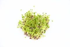 Brotos dos brócolis Fotografia de Stock Royalty Free
