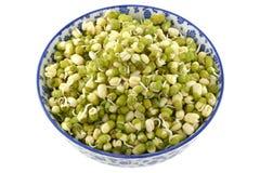 Brotos embebidos do feijão de Mung (grama verde) Fotos de Stock Royalty Free