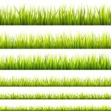 Brotos frescos e verdes da grama da mola e bandeiras sem emenda do crescimento erval Panorama do gramado da primavera em uma luz  ilustração stock