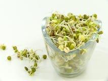 Brotos vegetais fotografia de stock