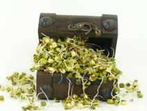 Brotos vegetais imagem de stock royalty free