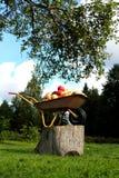 Brouette avec des pommes sous l'arbre Photographie stock libre de droits