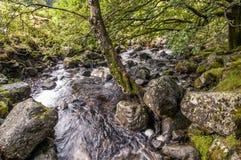 Brouette Beck dans le secteur de lac, R-U image stock