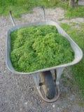 Brouette d'herbe Image stock