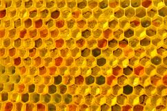 Brought pollen bees placed in the cells. They will fill it with honey. This forms a ambrosia stock photography