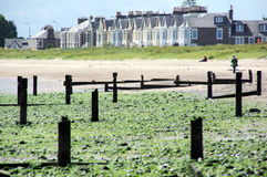 Broughty Ferry Terraced Huses Royalty Free Stock Photo