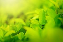 Brouillé des feuilles vertes, fond naturel photographie stock libre de droits