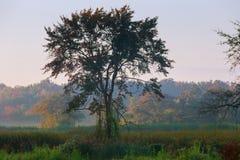 brouillard épais de matin dans la forêt à l'étang Paysage de matin en brouillard épais d'été Photos stock