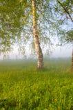 brouillard épais de matin dans la forêt d'été Photos stock