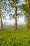 brouillard épais de matin dans la forêt d'été Images libres de droits