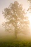 brouillard épais de matin dans la forêt d'été Photographie stock