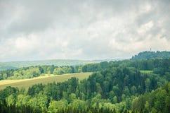 brouillard épais de matin dans la forêt d'été Images stock