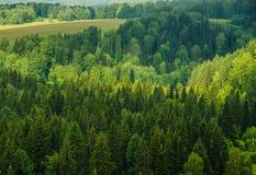 brouillard épais de matin dans la forêt d'été Photographie stock libre de droits