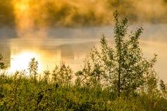 brouillard épais de matin dans la forêt d'été image libre de droits