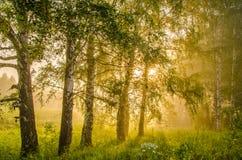 brouillard épais de matin dans la forêt d'été image stock
