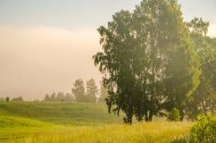brouillard épais de matin dans la forêt d'été photo stock