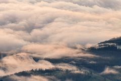 Brouillard épais pendant le matin au-dessus de la forêt Photos libres de droits