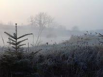 brouillard Image stock