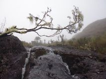 brouillard photos stock