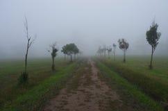 brouillard Photos libres de droits