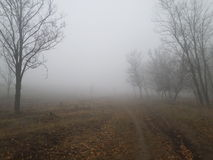 brouillard Photos stock