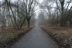 brouillard Photo stock