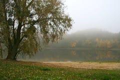 Brouillard, arbre, lac Image stock