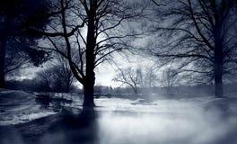 Brouillard argenté Images libres de droits