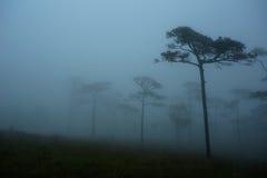 Brouillard au champ de pin en Phu Soi Dao National Park Photographie stock libre de droits