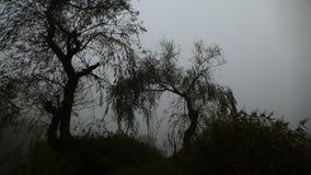 Brouillard au-dessus de l'étang Début de la matinée katowice poland photos stock