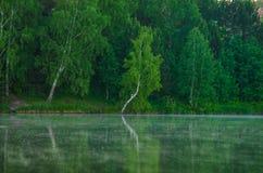 Brouillard au-dessus de l'eau Photographie stock
