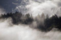 Brouillard au-dessus de la forêt image stock