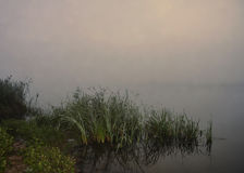 Brouillard au-dessus de rivière, matin d'été Photographie stock libre de droits