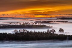 Brouillard au-dessus des arbres au coucher du soleil Images libres de droits