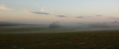 Brouillard au-dessus du pâturage photographie stock libre de droits