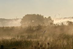 Brouillard/brume de matin à travers le marais photographie stock