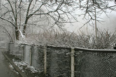 Brouillard, buisson de neige et barrière Photos stock