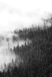 Brouillard contre la forêt Images stock