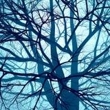 Brouillard d'arbre photographie stock