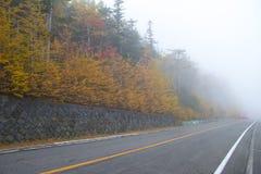 Brouillard d'arbre d'automne image stock