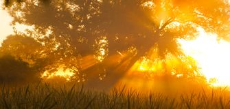 Brouillard d'arbre de matin Photographie stock libre de droits
