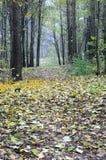 Brouillard d'automne dans la forêt Photographie stock