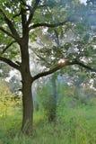 Brouillard dans la forêt Images libres de droits