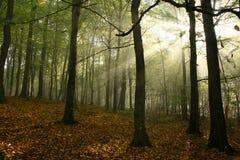 Brouillard dans la forêt Photos libres de droits