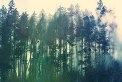 Brouillard dans la forêt Photos stock