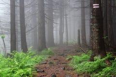 Brouillard dans la forêt Image stock